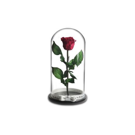 Nagy_Búra_örök_rózsa