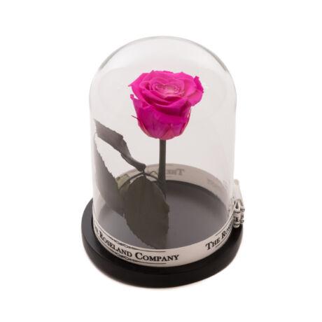Búra_örök_rózsa