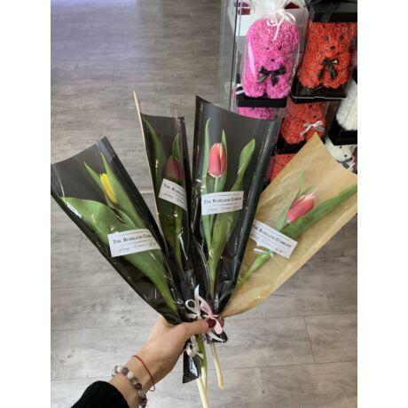 1 Szálas Tulipán Csokor